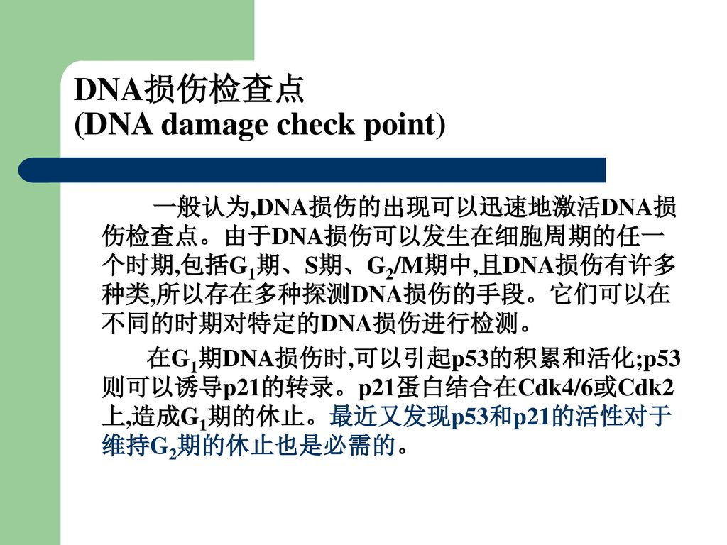 DNA损伤检查点 (DNA damage check point)
