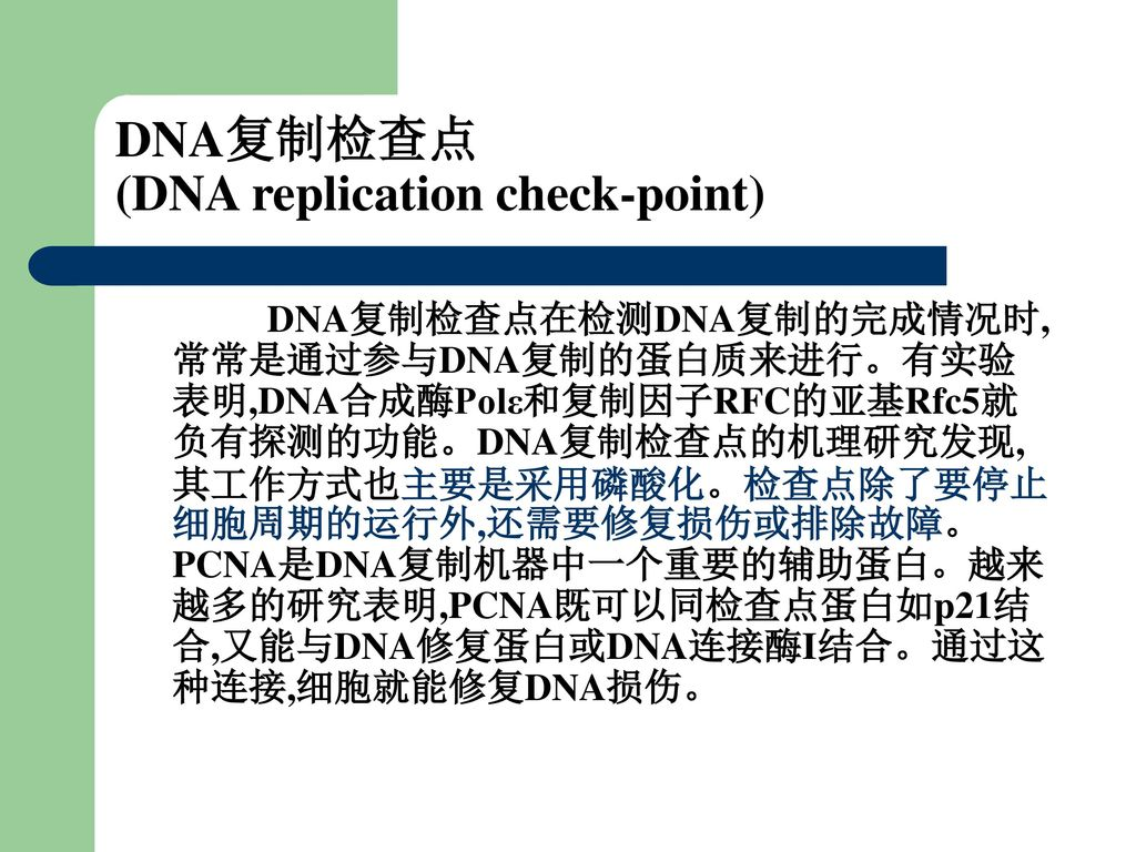 DNA复制检查点 (DNA replication check-point)