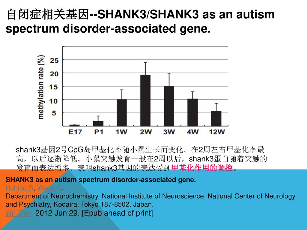 自闭症相关基因--SHANK3/SHANK3 as an autism spectrum disorder-associated gene.