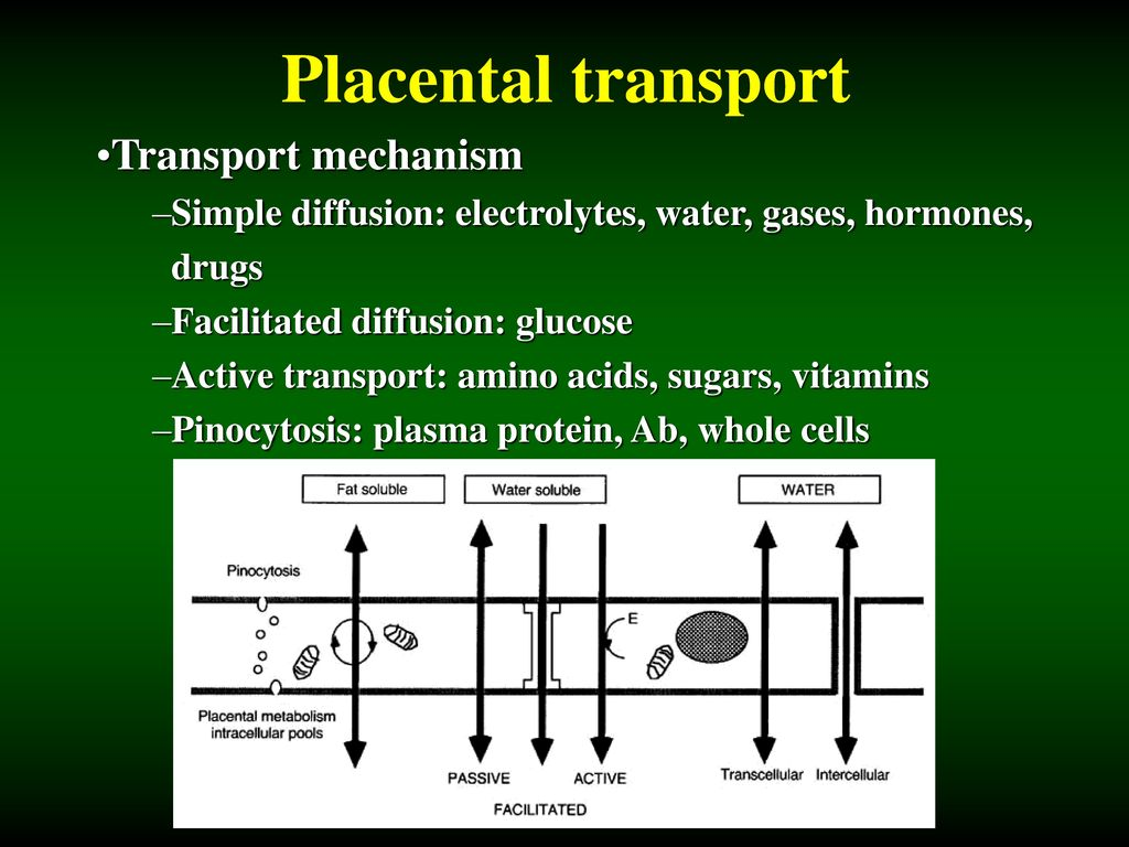 Placental transport Transport mechanism