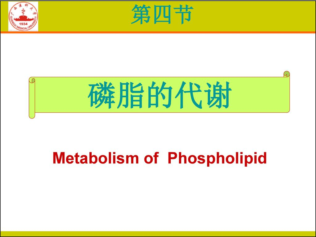 Metabolism of Phospholipid