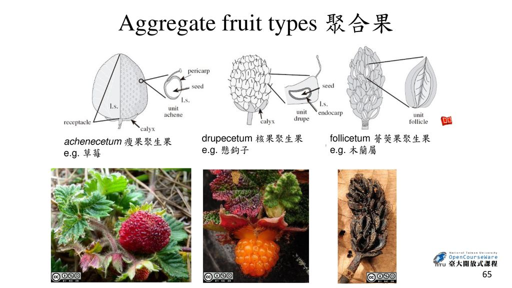 Aggregate fruit types 聚合果