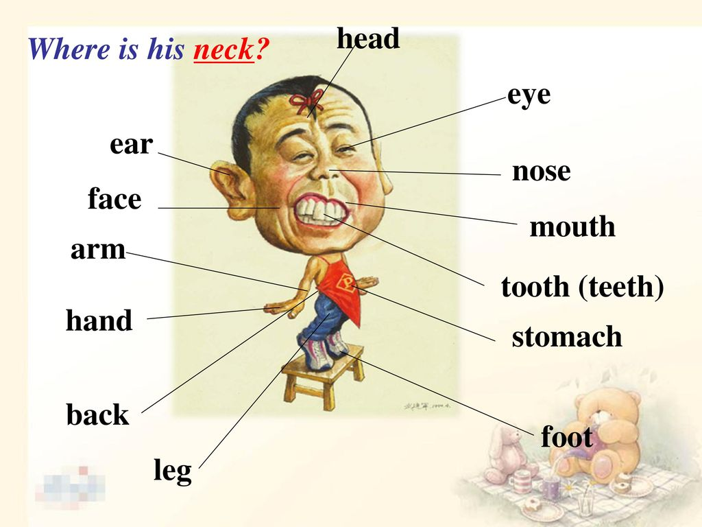 head Where is his neck eye ear nose face mouth arm tooth (teeth) hand stomach back foot leg
