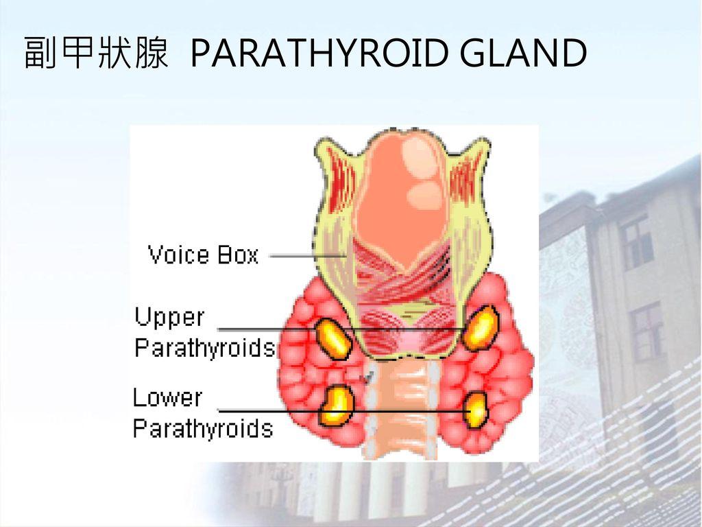 亢進 副 甲状腺 症 機能