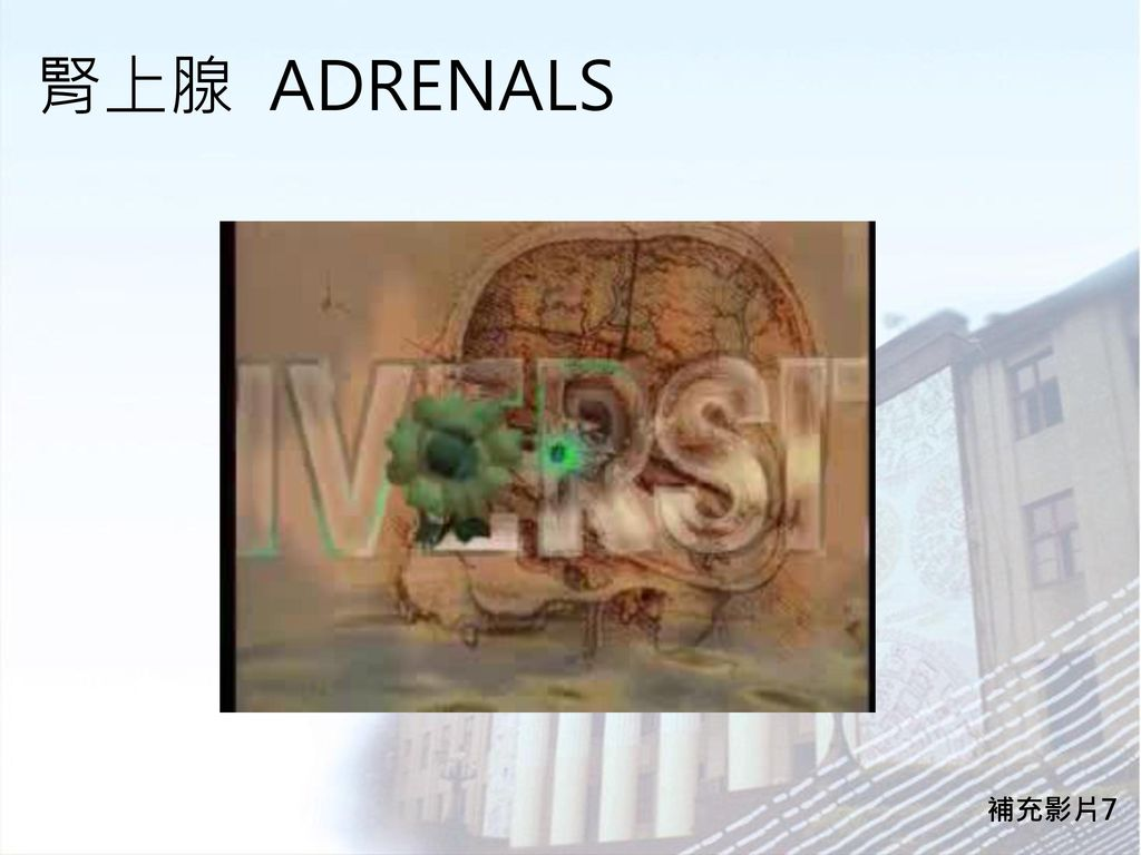 腎上腺 ADRENALS 補充影片7