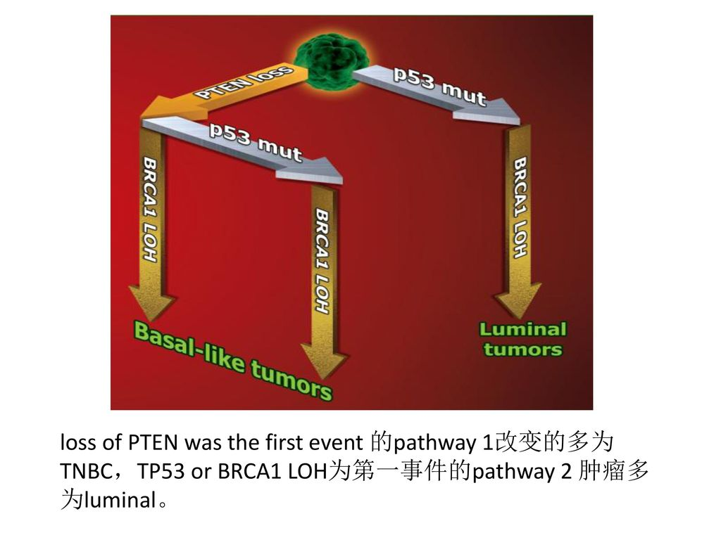 loss of PTEN was the first event 的pathway 1改变的多为TNBC,TP53 or BRCA1 LOH为第一事件的pathway 2 肿瘤多为luminal。