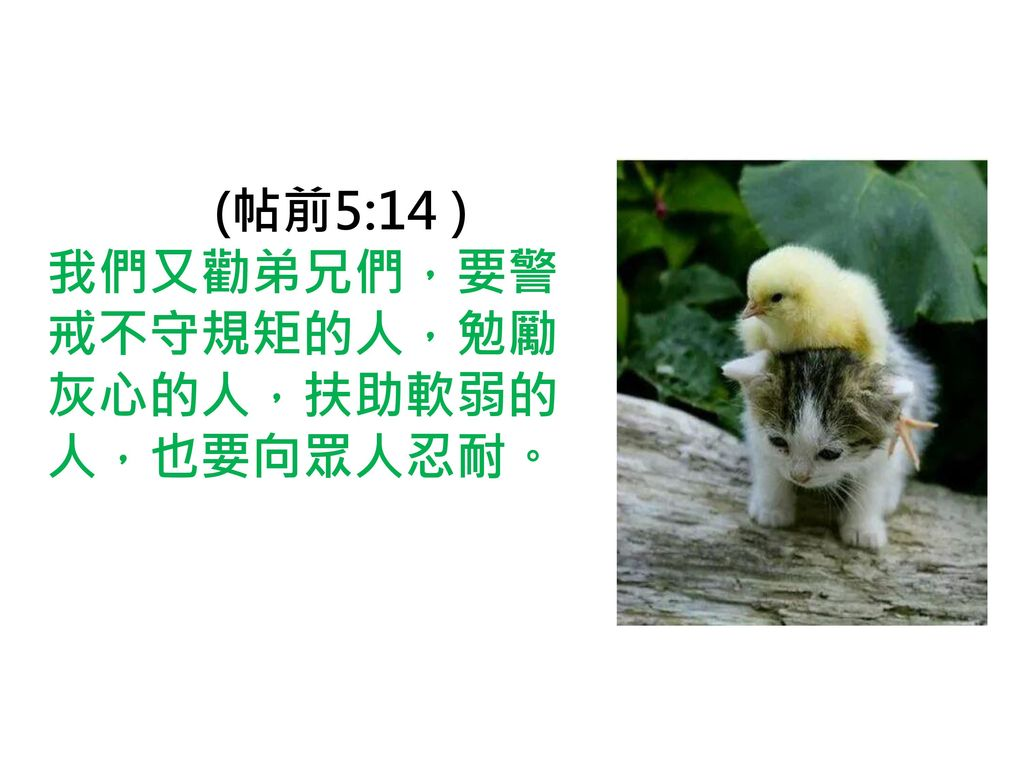 Image result for 帖前5:14