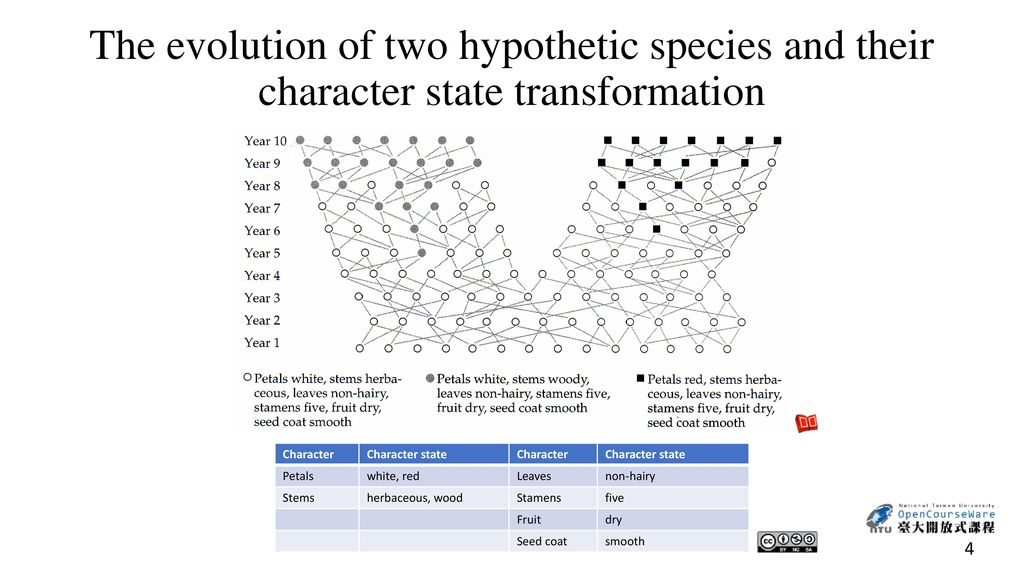 The evolution of two hypothetic species and their character state transformation