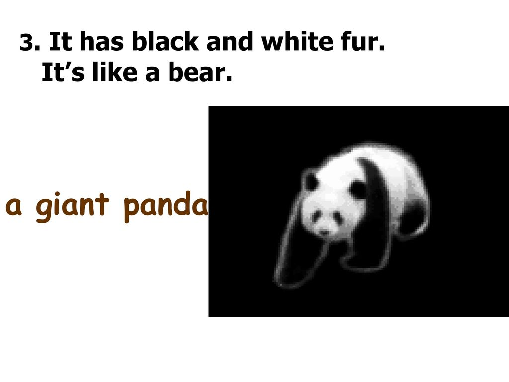 3. It has black and white fur.