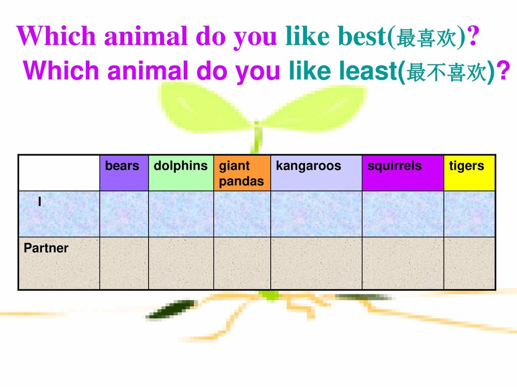 Which animal do you like best(最喜欢)