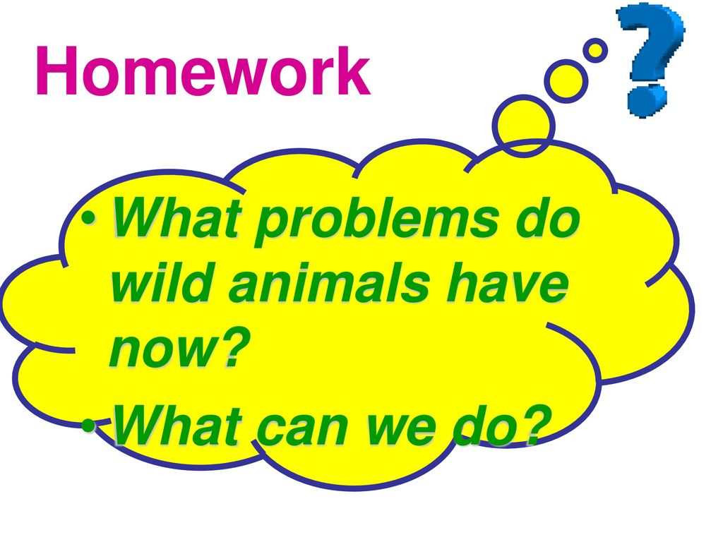 Homework What problems do wild animals have now What can we do