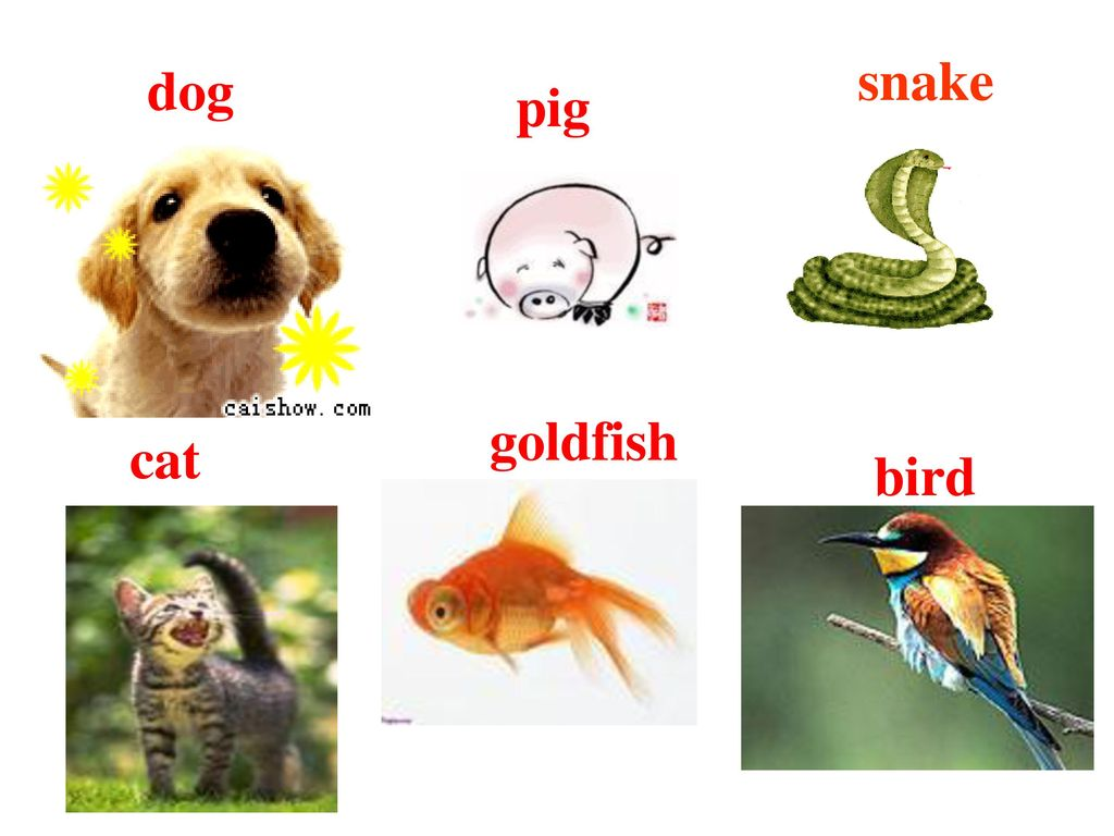 snake dog pig goldfish cat bird