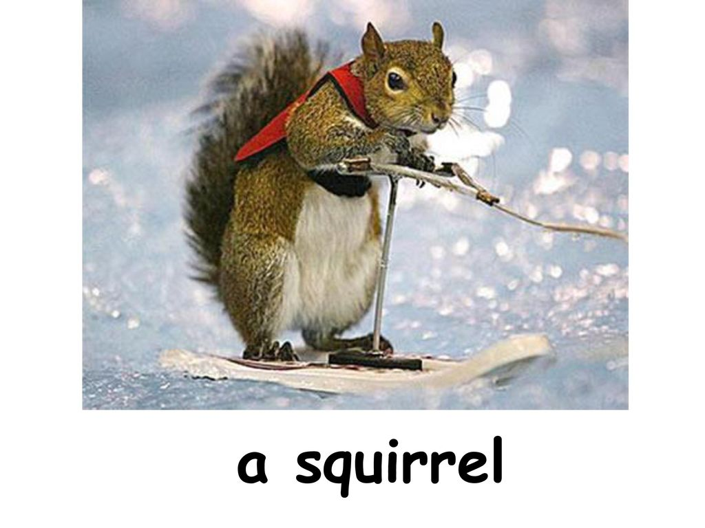 a squirrel